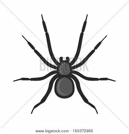 Black Spider Icon on White Background. Vector illustration