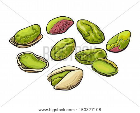 Whole and peeled pistachio nuts, vector illustration isolated on white background. Drawing of fresh and green pistachios on white background, delicious healthy vegan snack