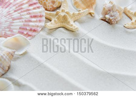 Beautiful frame of clams and starfishes on the background of wavy sea sand