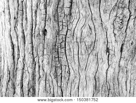 Close up old tree trunk old wood background