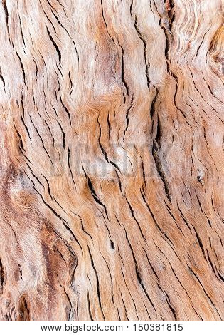old tree wood texture abstract background, brow color