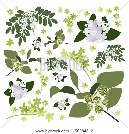 Set of drawing wild flowers, herbs and leaves, painted field plants, botanical illustration in flat style, colored floral collection, hand drawn vector image eps10