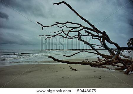 driftwood on hunting island in south carolina
