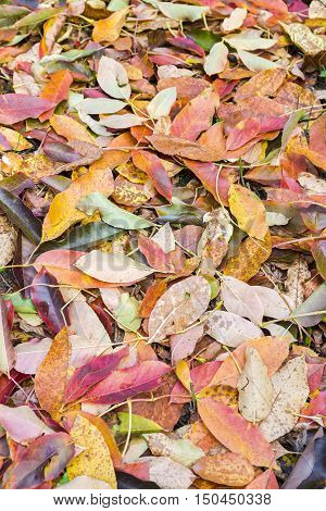 Autumnal Fallen Beech Leaves On Ground During Fall Season