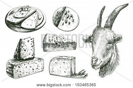 farming. goat breeding. livestock. cheesemaking. set of sketches on a white background