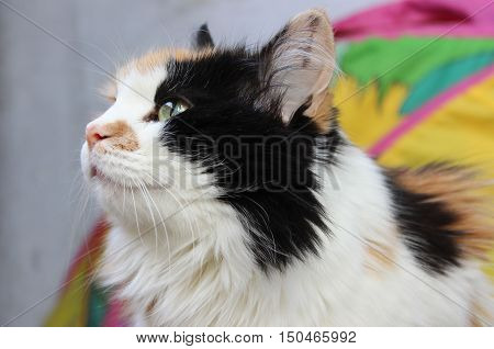 Close-up portrait of calico cat looking to the side