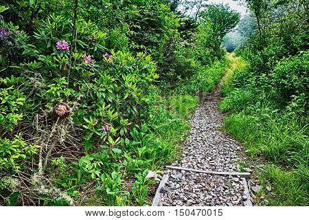Scenes Along Appalachian Trail In Great Smoky Mountains