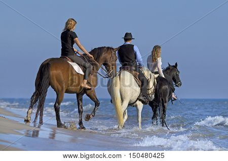 horse riders walking in the sea in evening