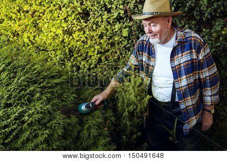 Senior man trimming garden plants. Gardening concept. Happy retirement.