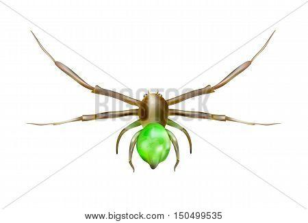 Green spider, isolated on white background, illustration.