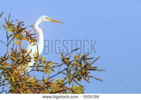 White Egret In Tree