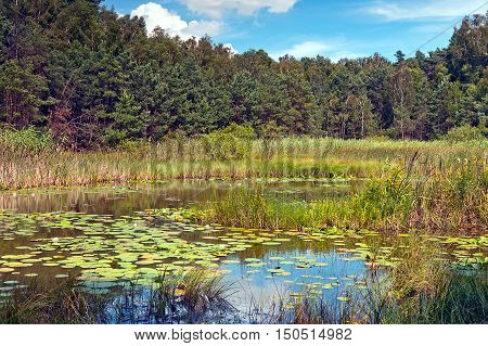 wild marsh area in Poland at sunny day