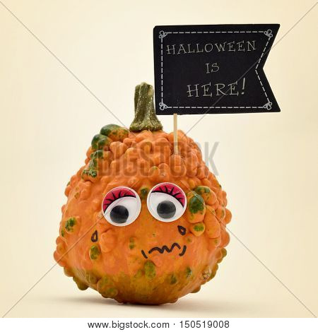 closeup of a terrified pumpkin with a black flag-shaped signboard with the text Halloween is here written in it, against an off-white background