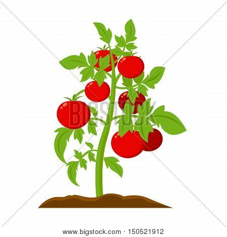 Tomato icon cartoon. Single plant icon from the big farm, garden, agriculture collection.