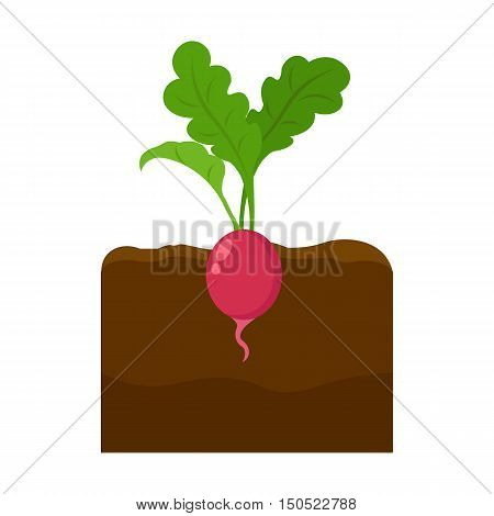 Radish icon cartoon. Single plant icon from the big farm, garden, agriculture collection.