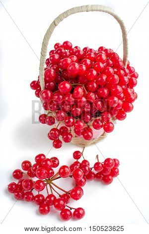 Red Berries Of Viburnum In Small Basket Isolated