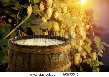 glass of beer with hop cones weather, wooden