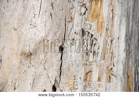 Traces from termites on a wood tree