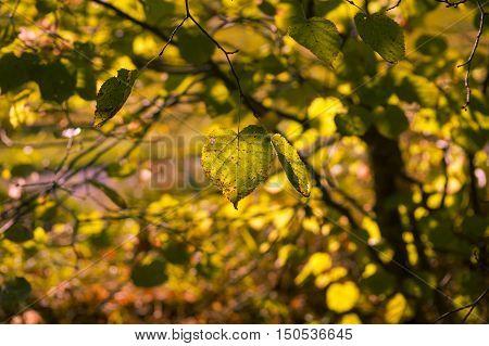 Blick auf gelbe Blätter in einem Wald