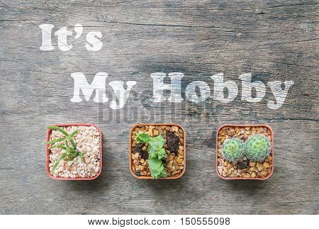 Closeup group of cactus in plastic brown pot on wood desk textured background in top view with it's my hobby sentence