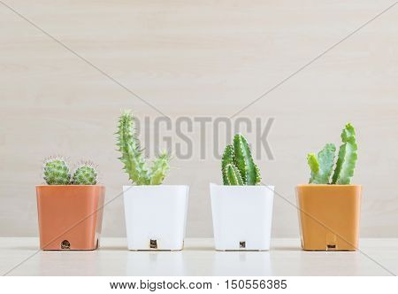 Closeup group of cactus in white and brown plastic pot on blurred wood desk and wood wall textured background with copy space