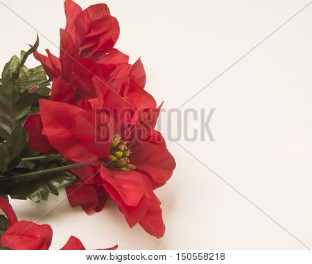 Beautiful; red seasonal flowers on a white service