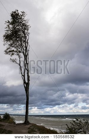 lonely tree at the sea coast against a cloudy sky on a windy autumn day concept to persevere and withstand vertical copy space