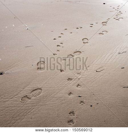 Footprints of dog and owner in wet sand on the beach background texture select focus narrow depth of field