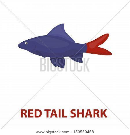 Red Tail Shark fish icon cartoon. Singe aquarium fish icon from the sea, ocean life cartoon.