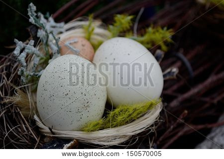Three eggs in a nest as a symbol of life