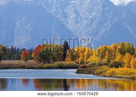 Fall colors at the Grand Teton National Park