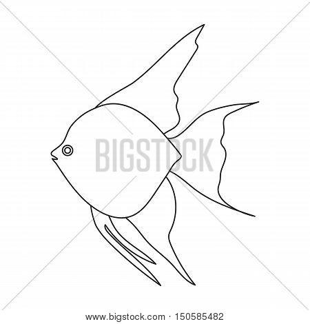 Angelfish common fish icon line. Singe aquarium fish icon from the sea