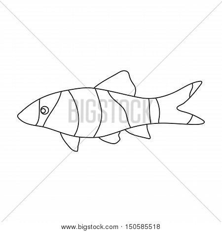 Botia clown Botia macracantha fish icon line. Singe aquarium fish icon from the sea