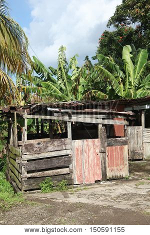 Caribbean tin shack displayed in the woods outdoors.