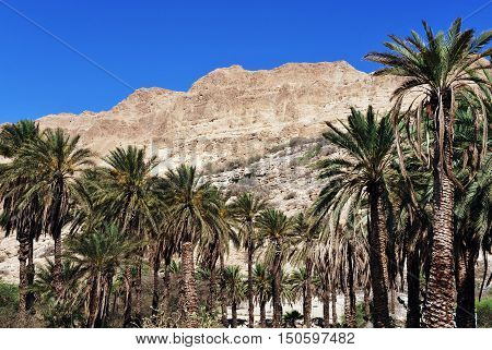 Travel Photos Of Israel - Ein Gedi Spring