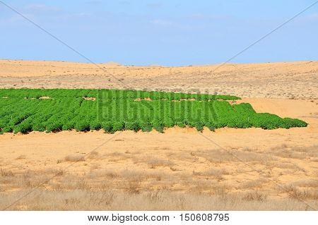 Landscape of Desert farming in the Negev Israel.