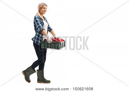 Full length profile shot of a female farmer carrying a crate full of red peppers isolated on white background