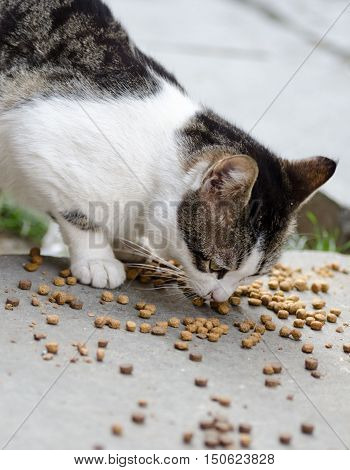 Stray cat eating on the street .