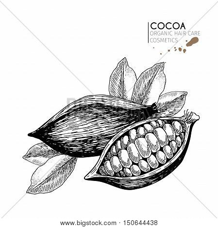 Vector set of hair care ingredients. Organic hand drawn elements. Cocoa beans and leaves. Use for cosmetic package shop store products spa salon wellnes program procedure skin hair care.
