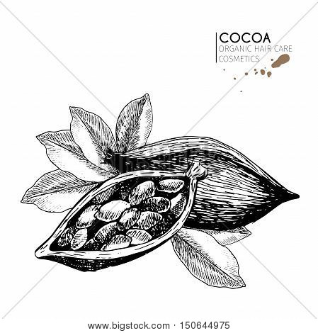 Cocoa beans and leaves. Use for cosmetic package shop store products spa salon wellnes program procedure skin hair care.