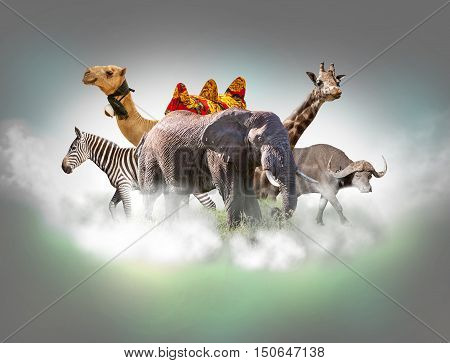 Wild animals group - giraffe, elephant, zebra, camel, buffalo above white clouds in gray sky