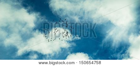 Birds Flying To The Warm Countries