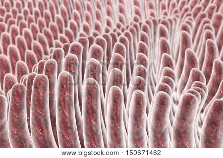 Villi of small intestine, 3D illustration. Intestinal environment, close-up view