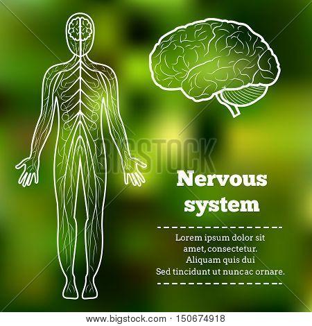 Human Body Neurology Anatomical Conception Vector Illustration