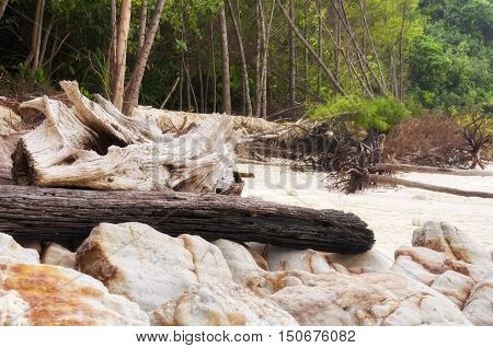 Rocks and driftwood washed up on to the shores of bamboo island in Thailand.