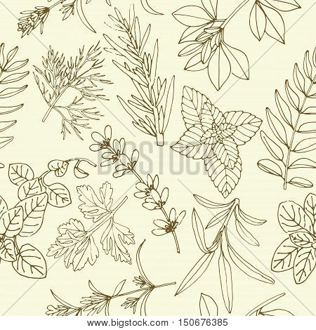 Vector background for label design for food, spices and herbs. herbs seamless pattern. Vector pattern of herbs. Seamless pattern of herbs. Vector Herbs background. Hand-drawn herb background.