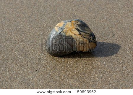 A marbled rock in grey and cream colors on a wet sand beach