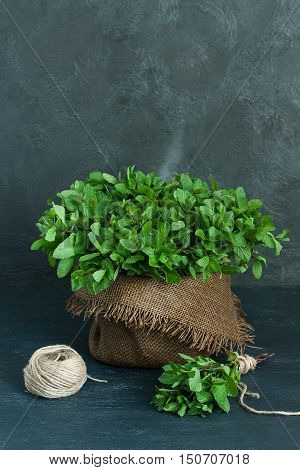 Brown pot sheaf of mint and skein of twine on gray background