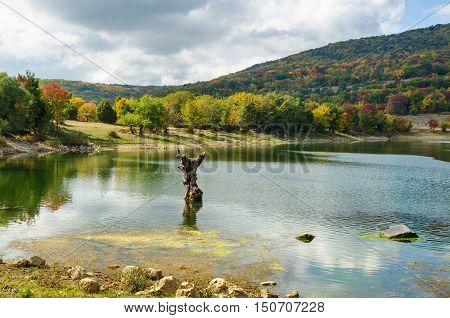 Autumn landscape. Autumn forest on the lake dry tree in water.