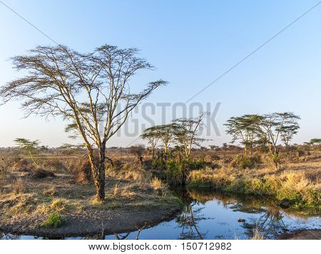 Sunset In The Serengeti National Park